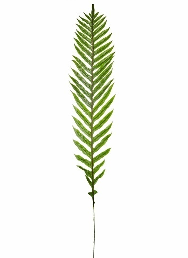 The Mia Sword Fern Yaprak 160 x 20 Cm Yeşil